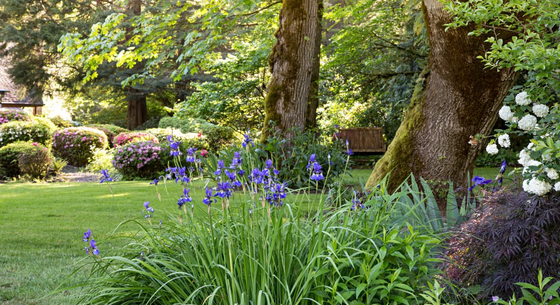Stately trees and a wooden bench amongst grass and bushes with white and purple flowers in the foreground.