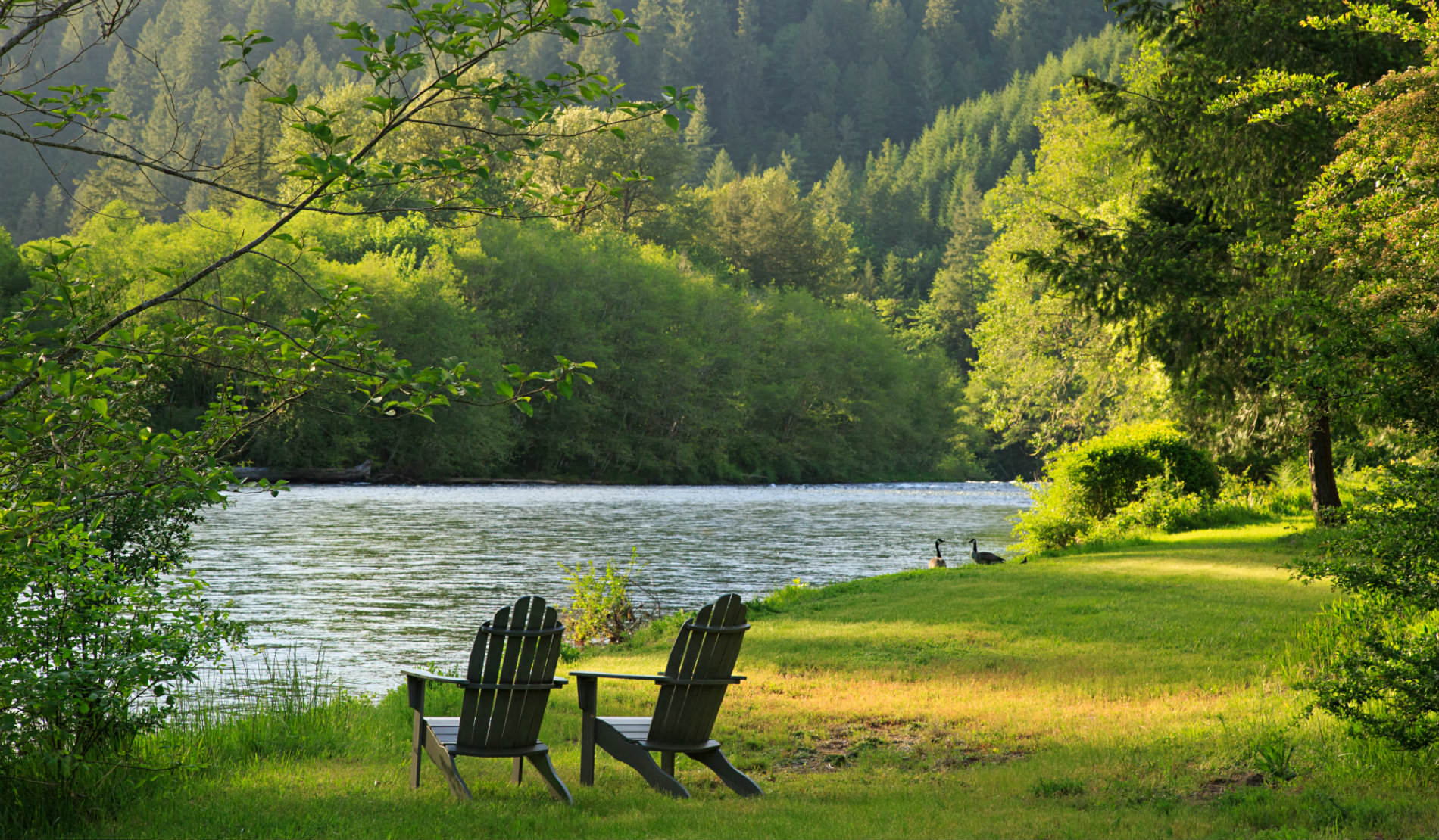 Two wooden Adirondack chairs on green grass facing river with two geese on bank