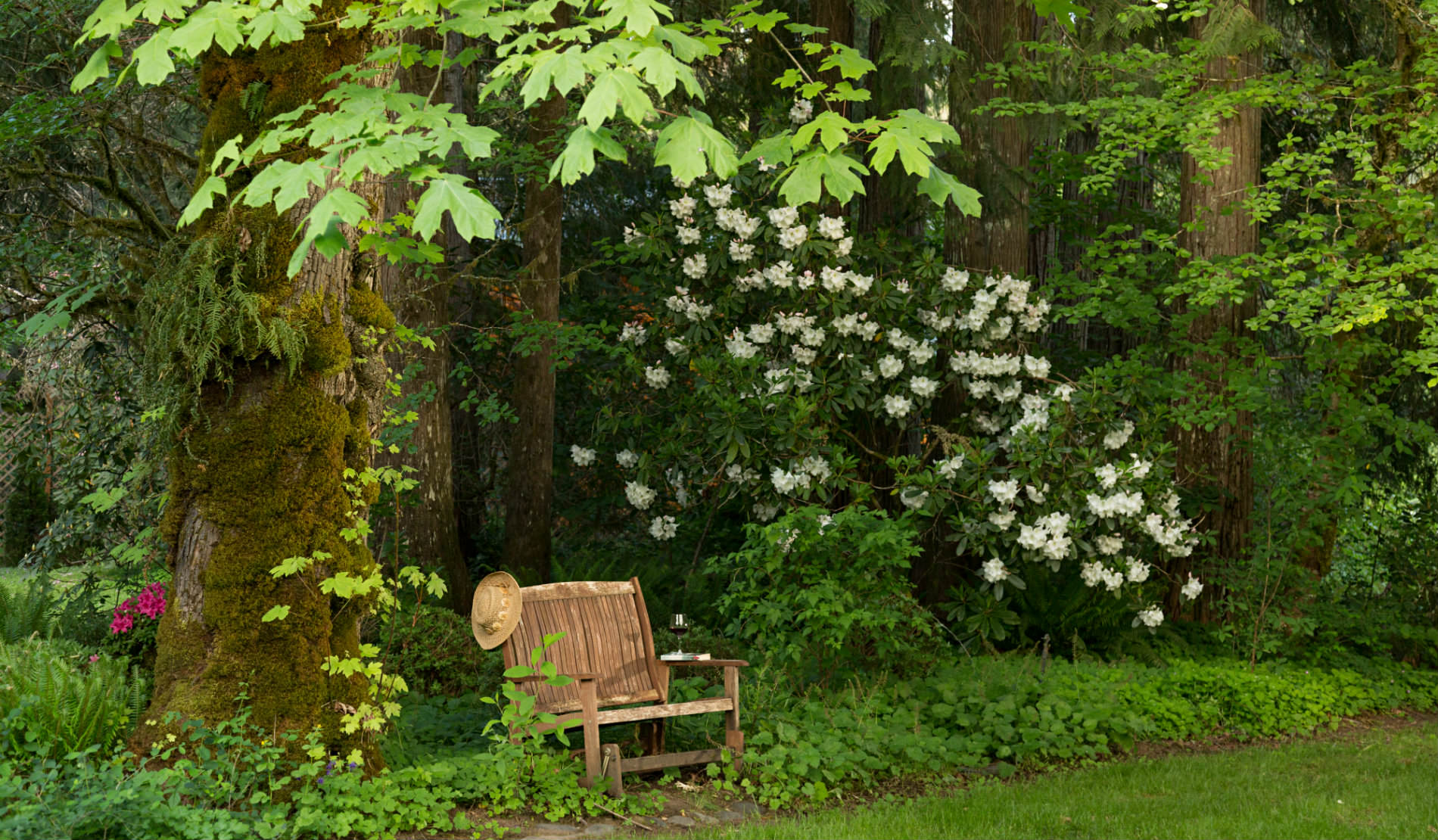 Deeply wooded background with white flowers and small wooden bench